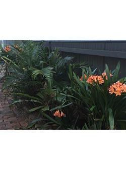Narrabeen Garden After